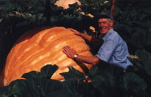 Pumpkin - Dills Atlantic Giant