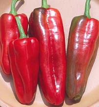 Pepper Seed - Sweet Marconi Italian Red