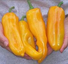 Pepper Seed - Sweet Marconi Golden