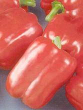 Pepper Seed - Sweet Keystone Resistant Giant