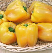 Pepper Seed - Sweet Golden Summer