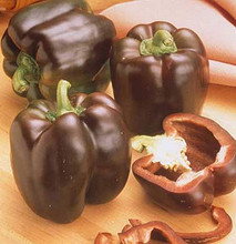 Pepper Seed - Sweet Chocolate Beauty