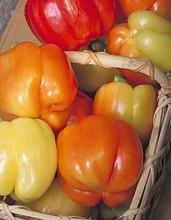 Pepper Seed - Sweet Blushing Beauty