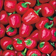 Pepper Seed - Sweet Baby Red