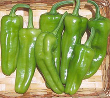 Pepper Seed - Hot Pepperoncini Italian