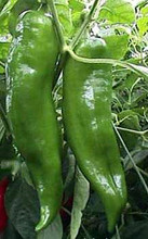 Pepper Seed - HOT Cowhorn