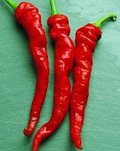 Pepper Seed -  Hot Cayenne Long Red Thick