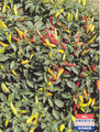 Pepper Seed - HOT - Super Chile