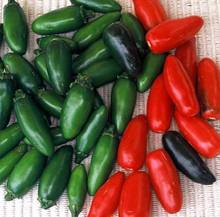 Pepper Seed - HOT - Serrano Chili