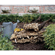 "Stoker's Moors Dragon Skull Sculpture 18.5""H"