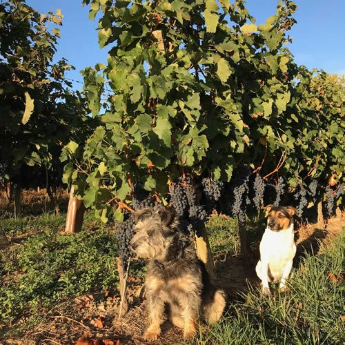 Les Trois Hectares Rouge 2018