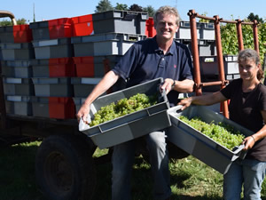 Bauduc September 2014 Harvest