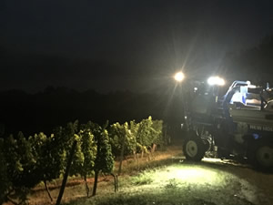 Harvest 2016 - In The Dark