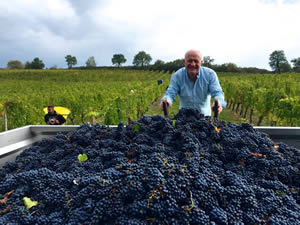 Rick observing the Cabernet at Bauduc