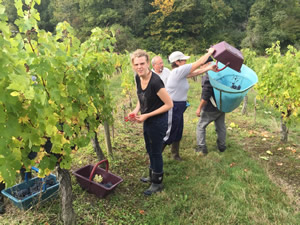 Rick Stein helping with the 2015 Harvest