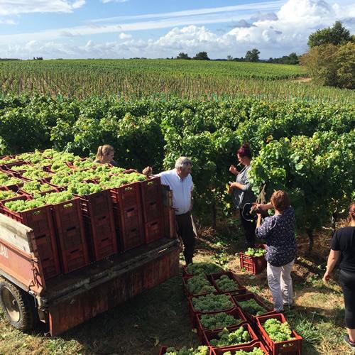 Crémant de Bordeaux 2016