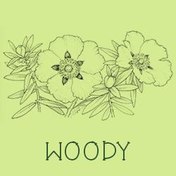 Woody scent profiles