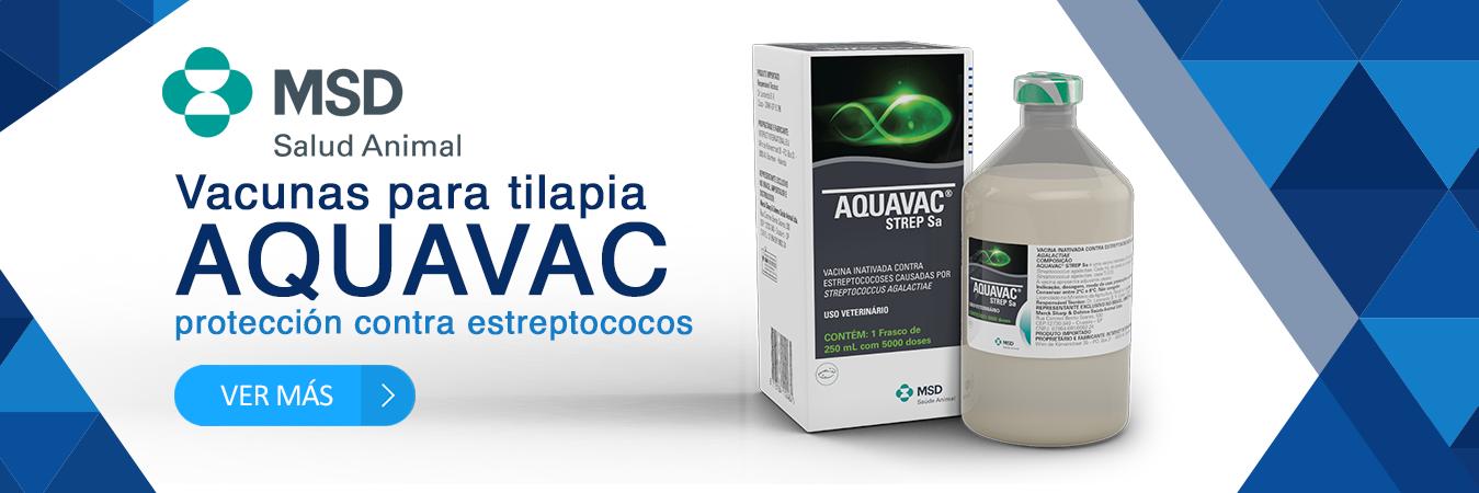 Aquavac de MSD vacuna para tilapia contra estreptococos