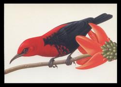 U.S. Scott # UX 293-6, 1998 20c Tropical Birds - Mint Picture Postal Card Set of 4