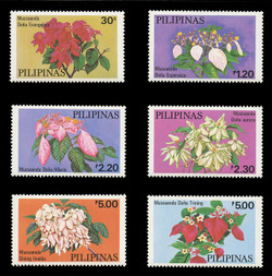 PHILIPPINES Scott # 1411-6, 1979 Philippine Mussaendas (Set of 6)