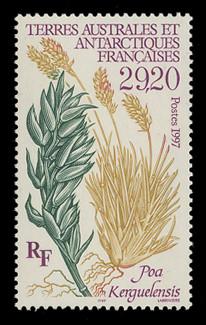 FSAT Scott # 229, 1997 Plant - Poa Kerguelensis