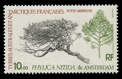 FSAT Scott # C  59, 1979 Tree - Phylicia Nitida, Amsterdam Island