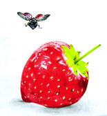 Fly and Strawberry by Manuela Lai Canvas Giclee Art Print
