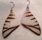Butterfly Wing (Eurytides agesilaus) Earrings