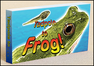 Tadpole to Frog Metamorphosis Book - Flipbook 401FROG