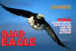 Bald Eagle Book - Flipbook