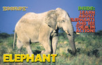 Elephant Book - Flipbook