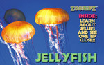 Jellyfish Book -Flipbook