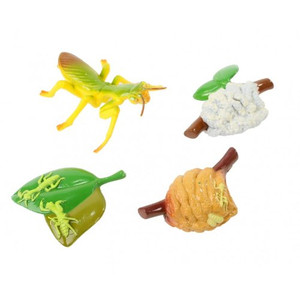 Praying Mantis Life Cycle Stages Replica Set 2510