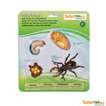 Life Cycle of a Stag Beetle Replica Set 661416
