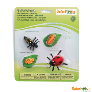 Life Cycle of a Ladybug Replica Set 662716
