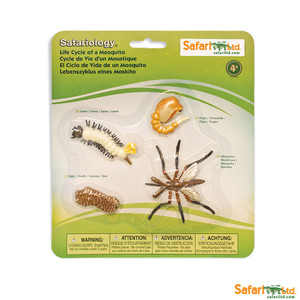 Life Cycle of a Mosquito Replica Set 662616