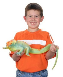 Ginormous Grow Lizard Grow in Water Toy