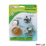 Life Cycle of a Green Sea Turtle Replica Set