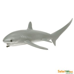 Safari -Thresher Shark Replica
