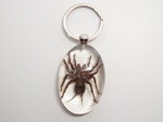 Real Tarantula Key Chain