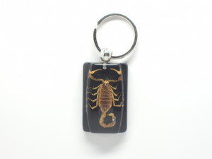 Golden Scorpion Keychain on Black Square