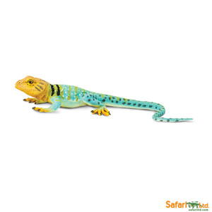Collared Lizard Replica 271029
