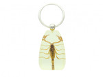 Golden Scorpion Keychain Large - Real Scorpion Key Ring (SK12GSKC)