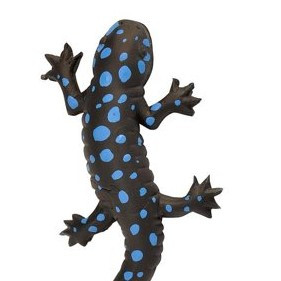 "Rubber Blue Spotted Salamander Toy, Amphibian, 6"" - Wild Republic (20761)"
