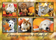 FALL2 - Thanksgiving Card