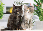 WELCOMECAT2