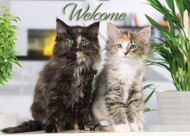 WELCOMECAT2