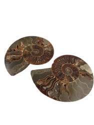 Natural Ammonite Fossil Pair (Large)
