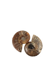 Natural Ammonite Fossil Pair (Small)