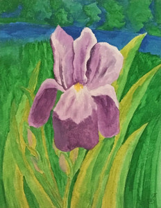PURPLE IRIS by Sharon Boggs